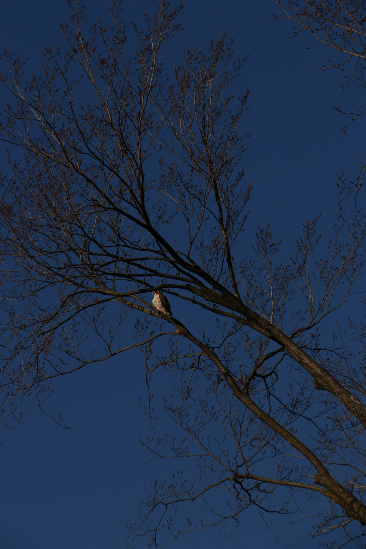 The Hawk 12