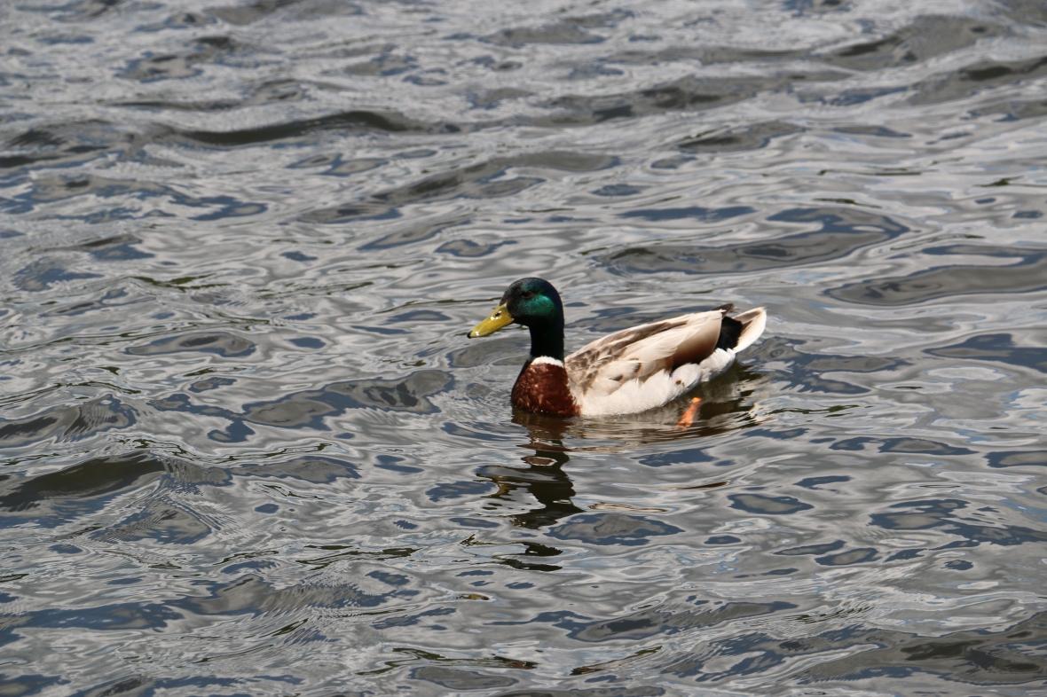 Aww shucky ducky quack quack!!