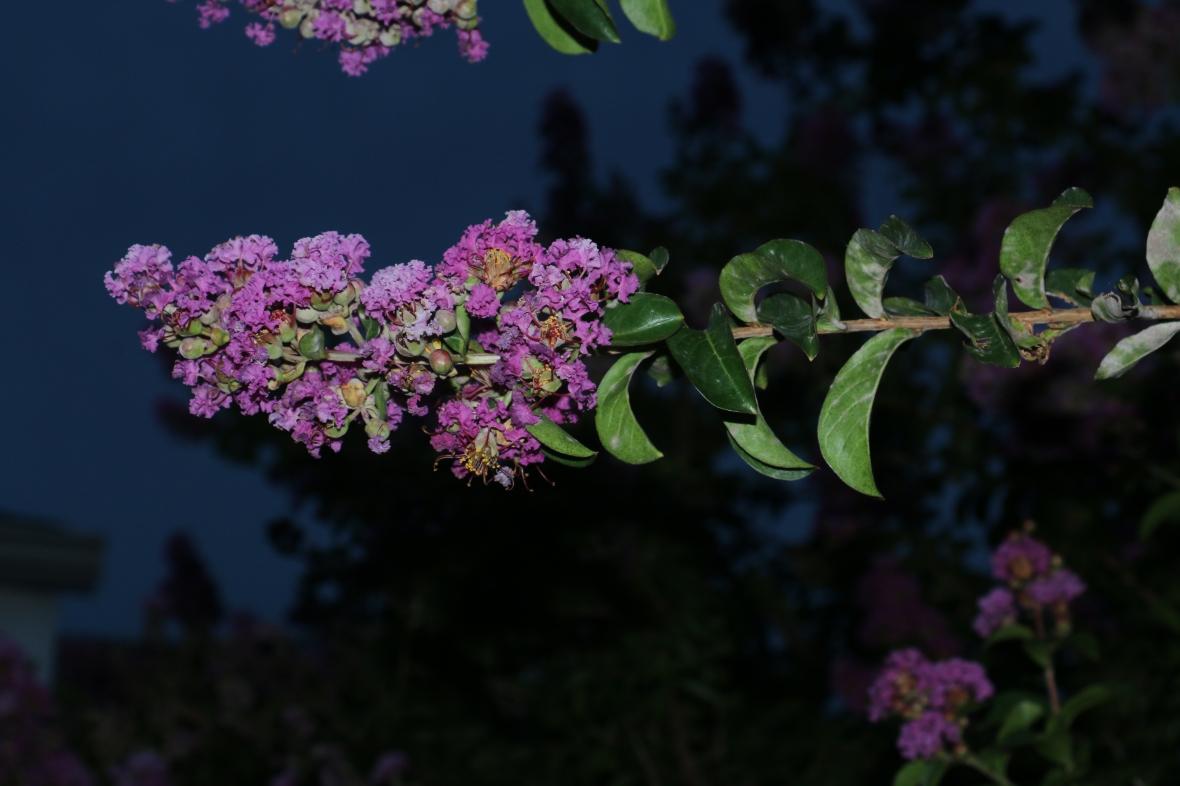 Horizontal Floral Pattern
