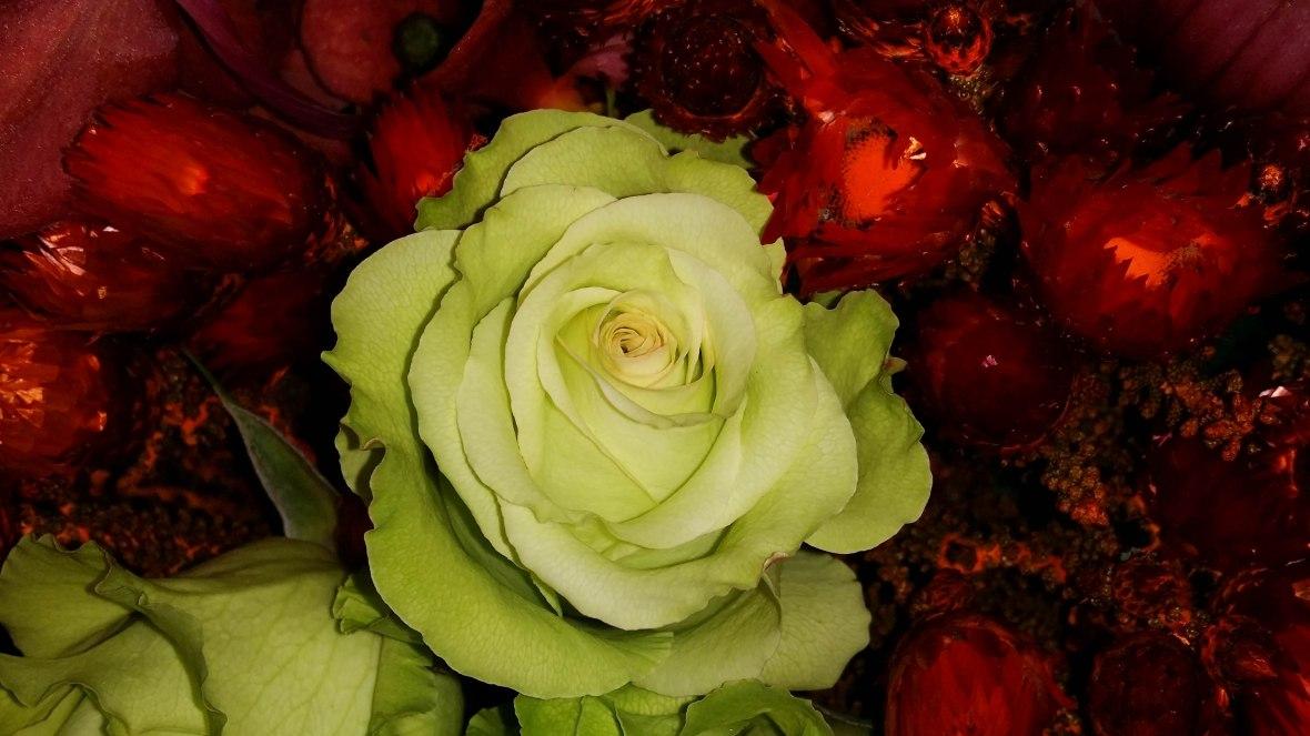 Green Rose Fiery Red Sea