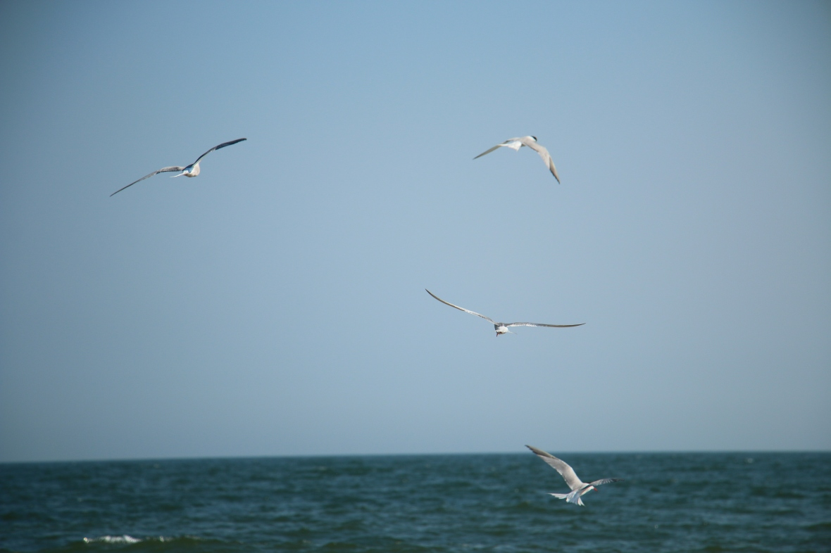 Seagulls over the Water