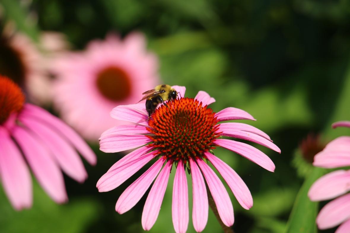 Bee & Flower 3