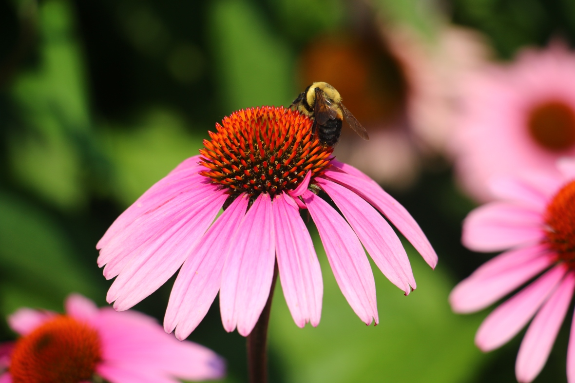 Bee & Flower 4