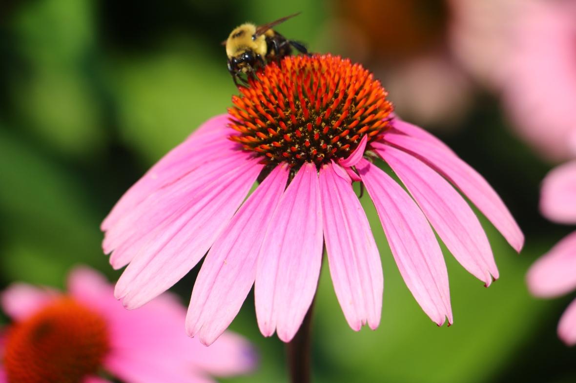 Bee & Flower 5
