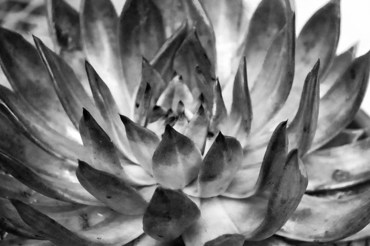 The Succulents II