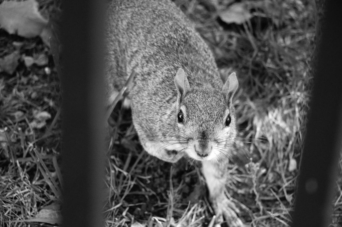 The Squirrels II
