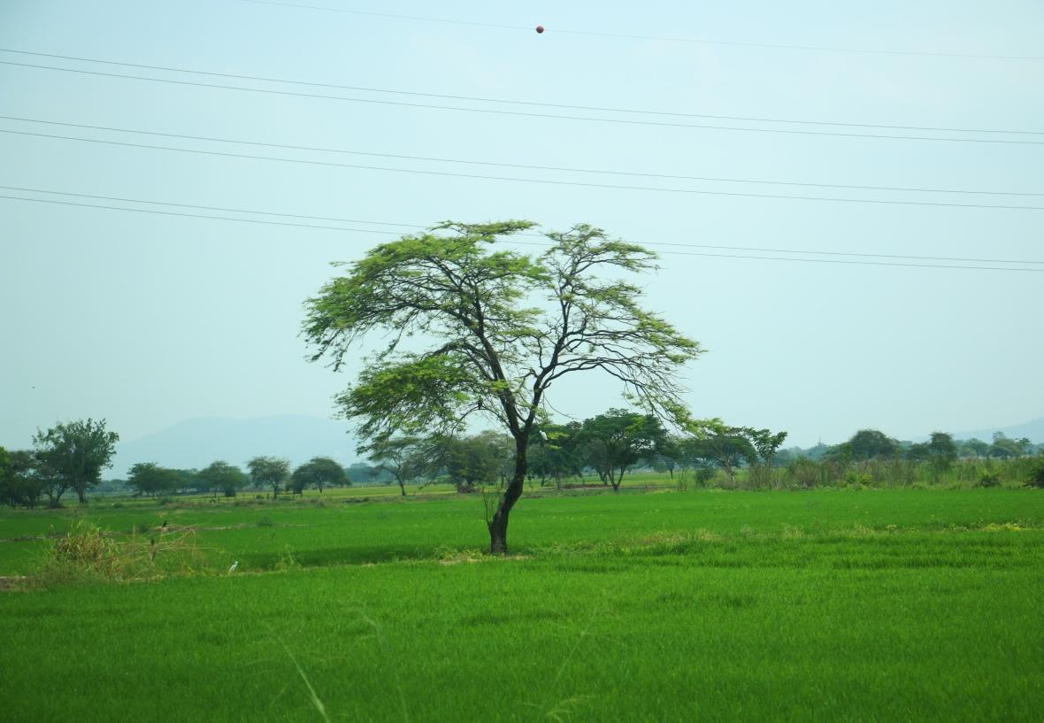 Green Tree Ecuador