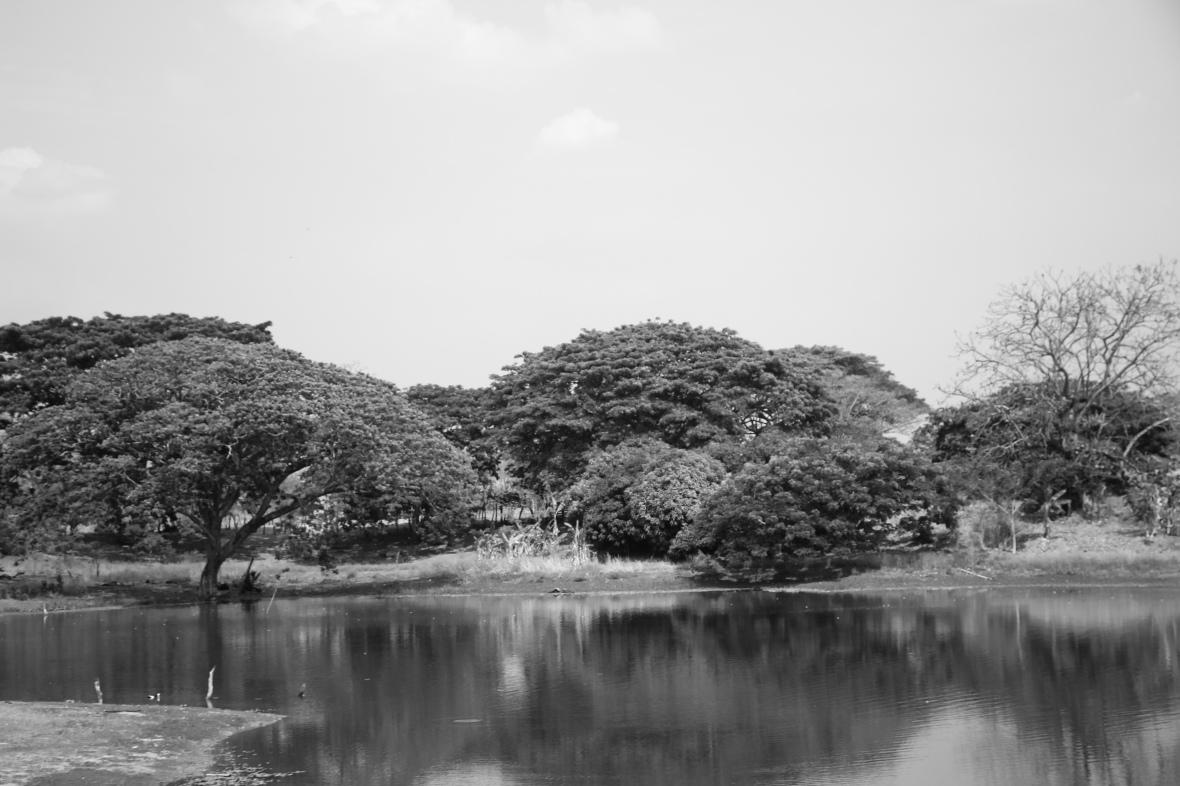 B + W Portrait: Lake & Trees