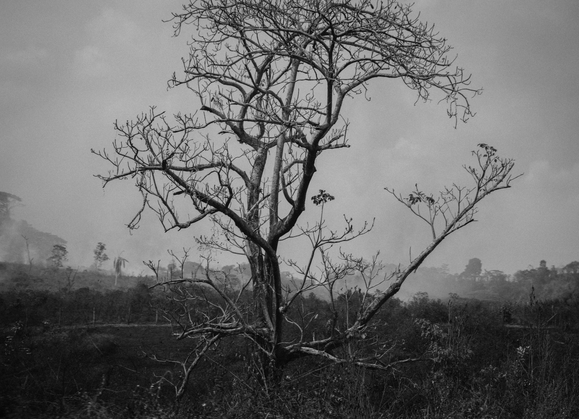 B + W The Barren Tree Stands Alone