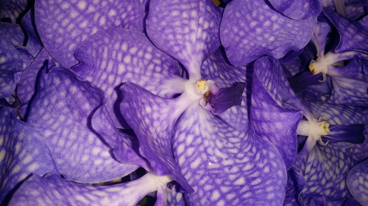 The Purple Speckled Orchid