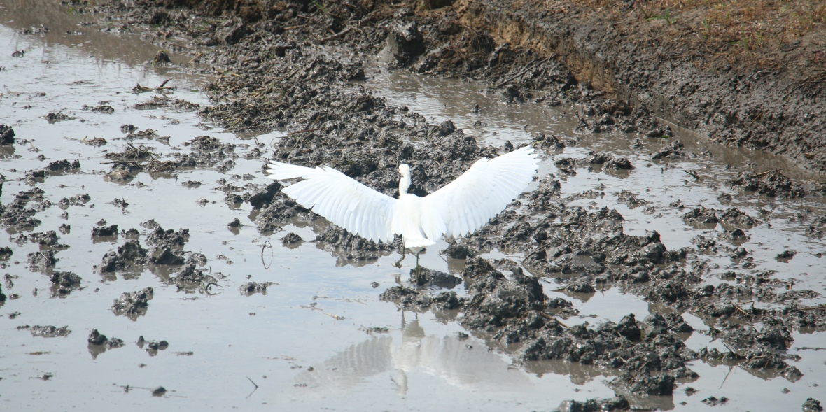 La Garza Wings Flared