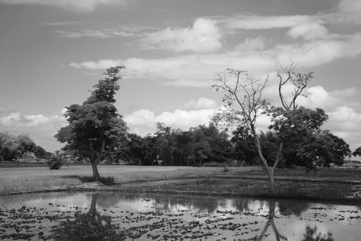 B + W Trees & Water Landscape