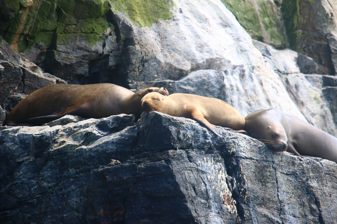Seal Trio Lounging