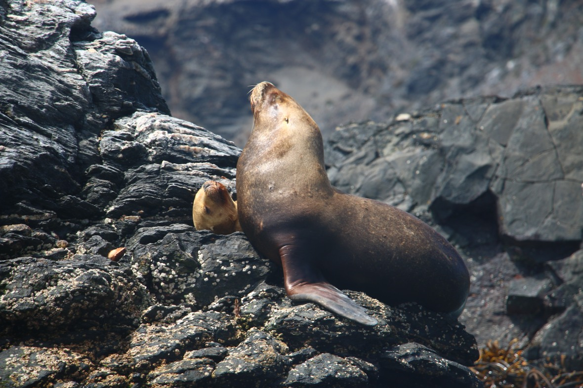 Seal Posing