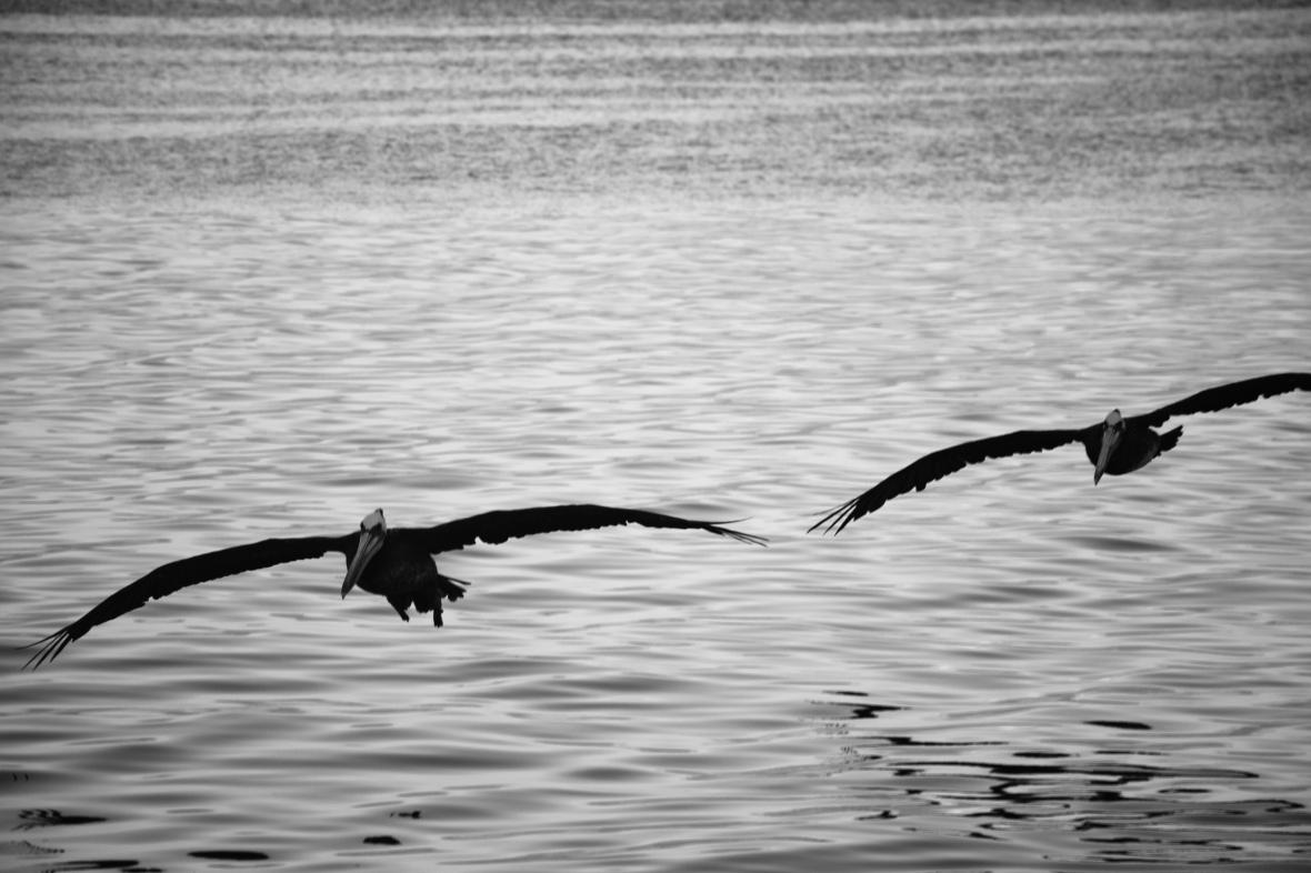 Twins Incoming Los Pelicanos