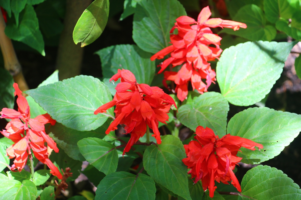 "Flowers of Chile ""Red Bag"""