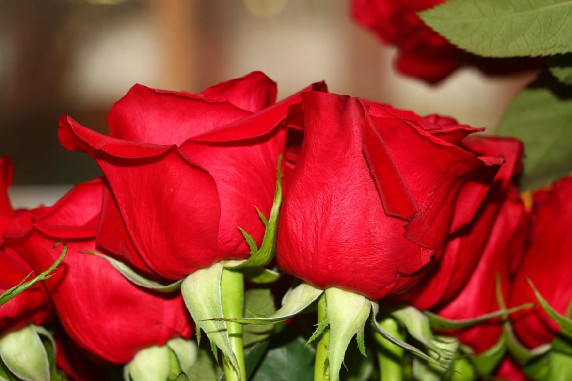 Red Rose Parade