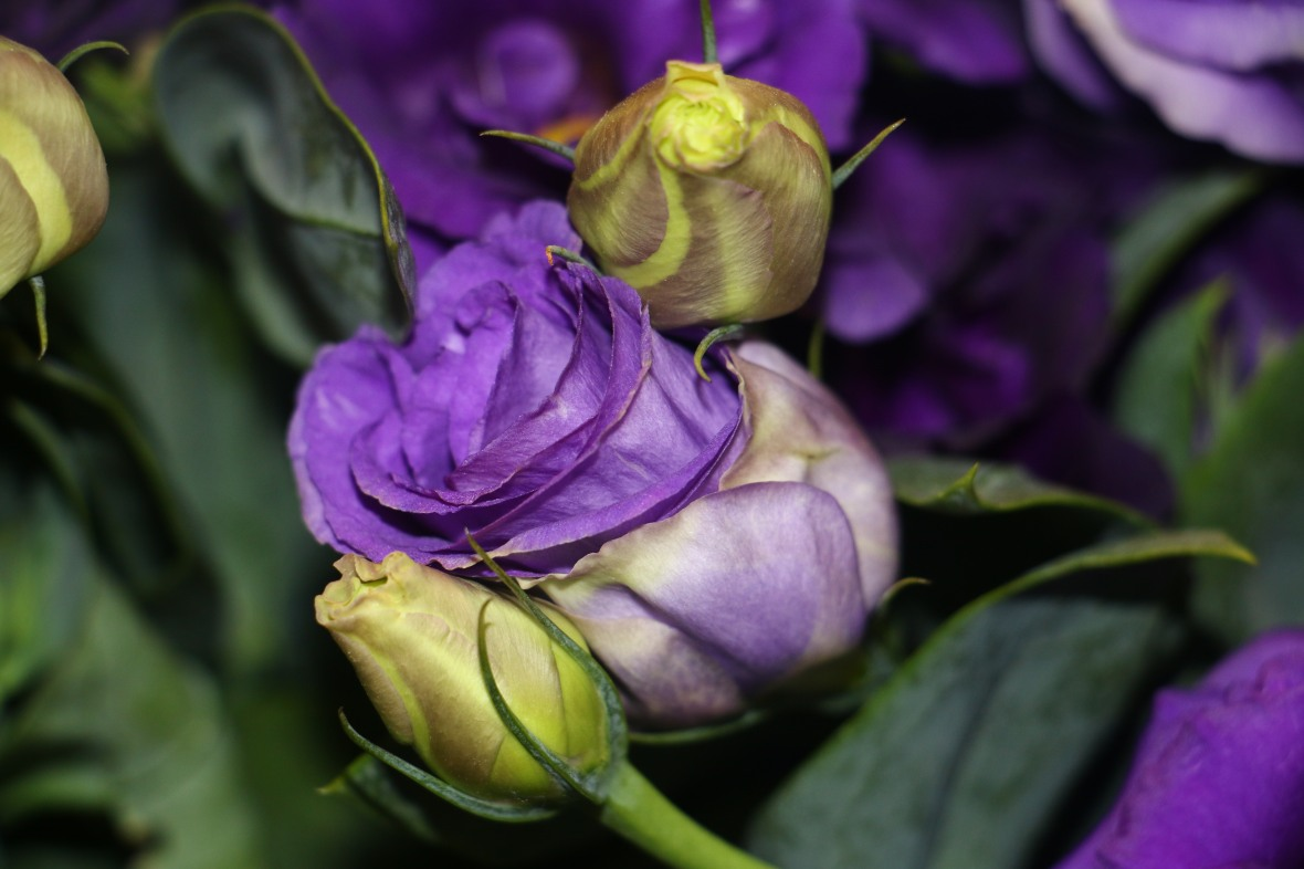 Purple Lisianthus Leaning Center