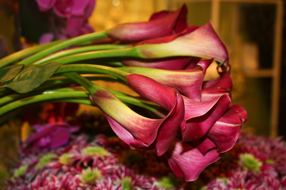 """8 Voices"" The Calla - Lilies"