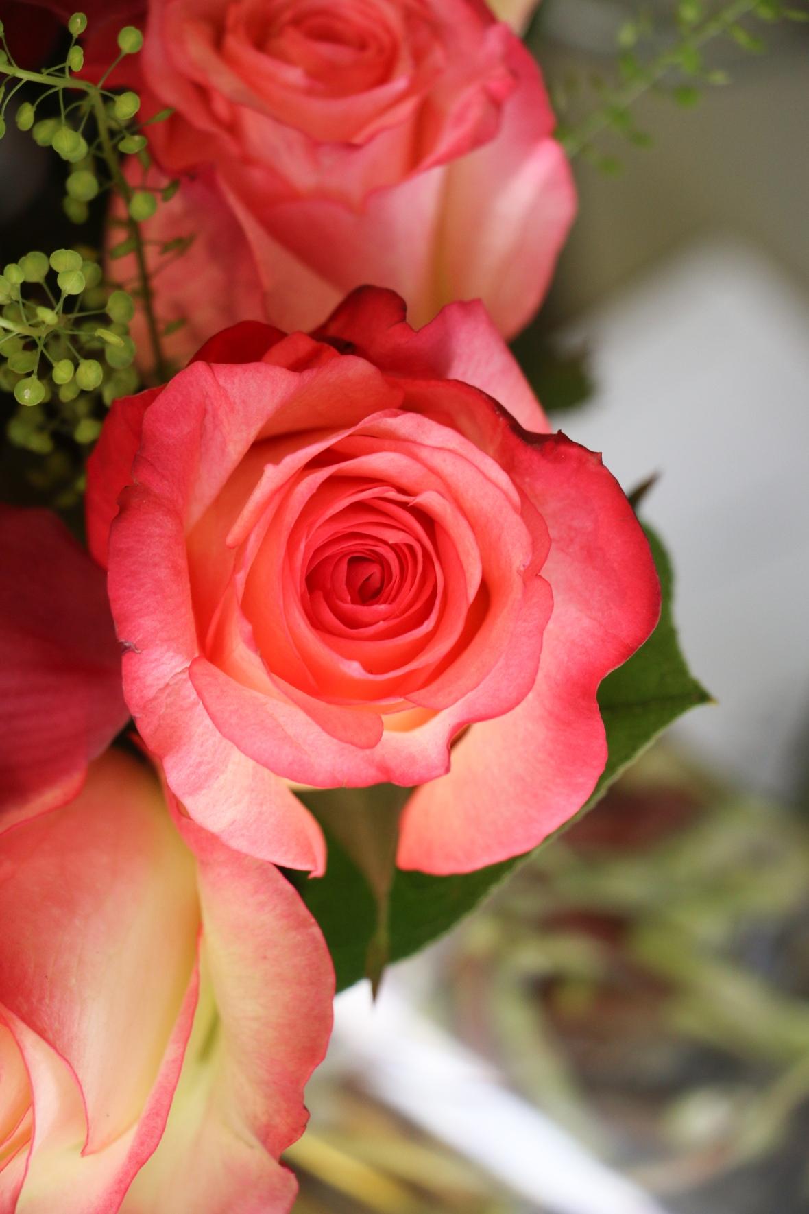 "Roses of Valentine: III ""XL"""