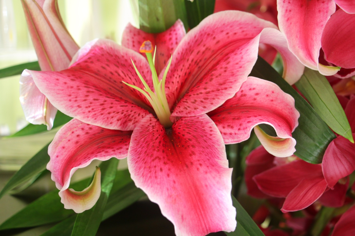 Fully Open Lily
