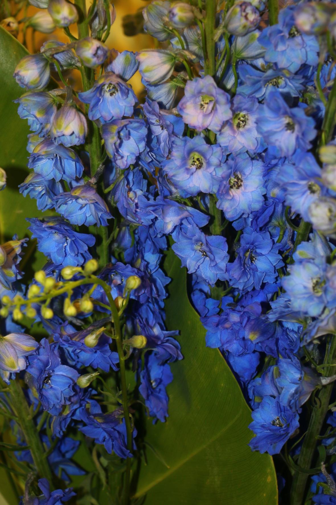 Floral Portrait Series: The Blue Delphiniums ala J Cellan Designs