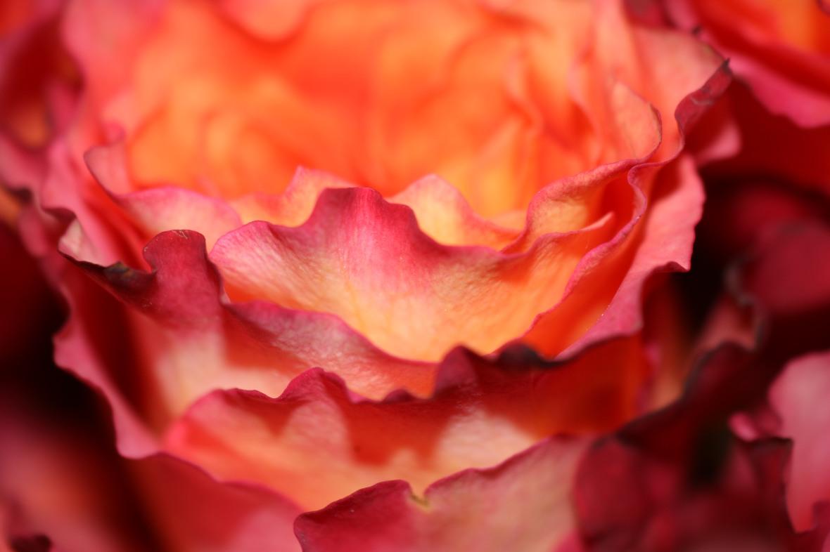 Floral Portrait Series: Free Spirits Macro