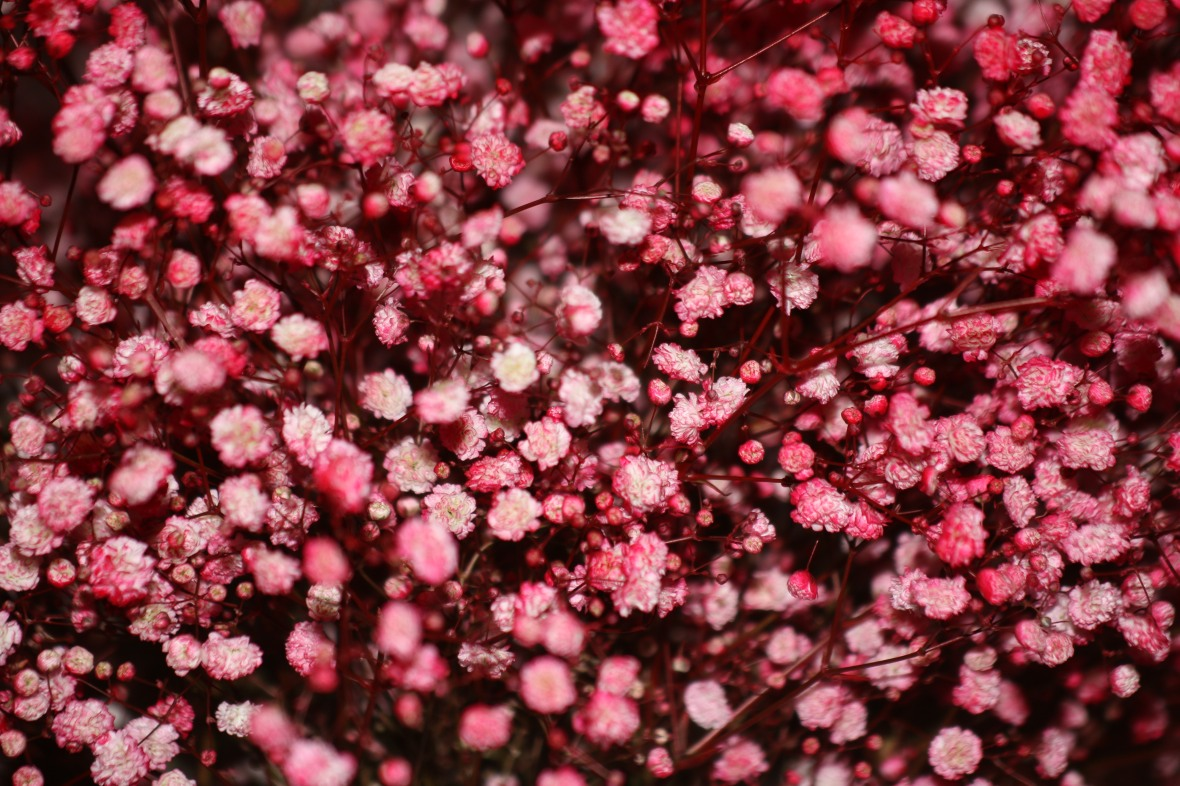 Floral Portrait Series: Baby's Breath (Red)