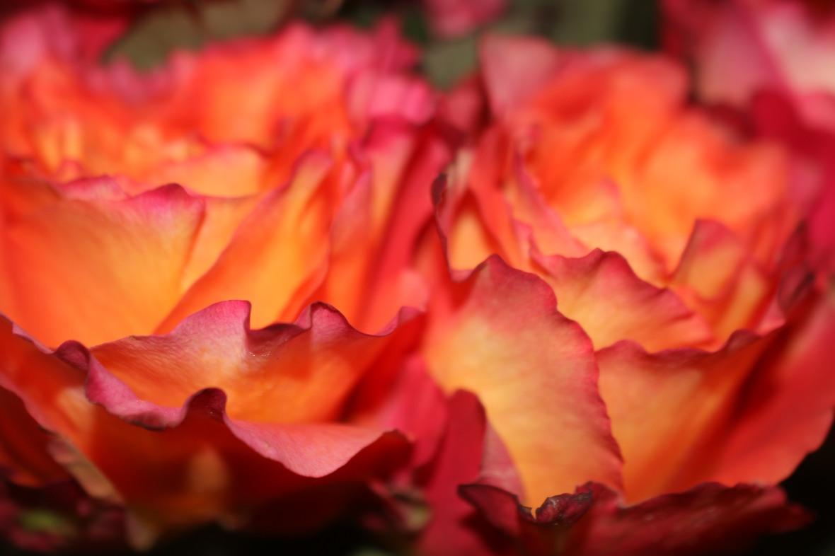 Floral Portrait Series: Free Spirits Macro II