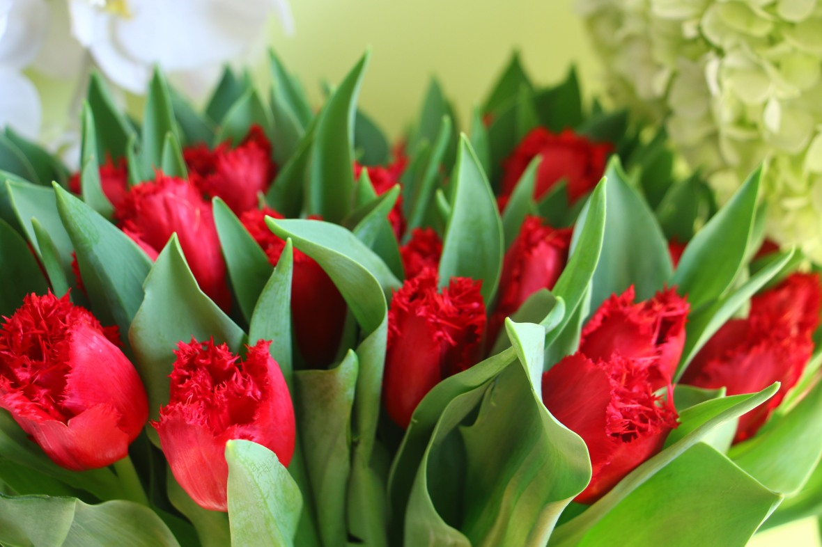 Red Flame Tulips @ J Cellan Designs Boutique, NYC