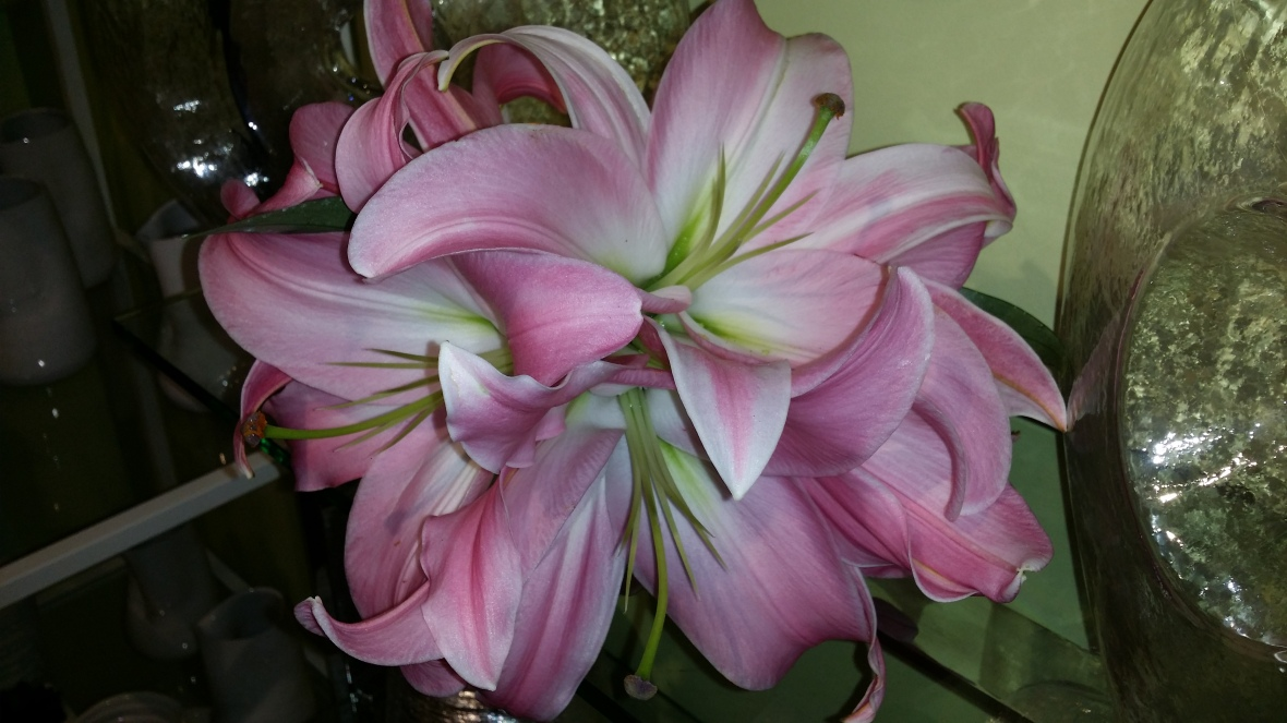 Pink Stargazers Bouquet @ J Cellan Designs Boutique