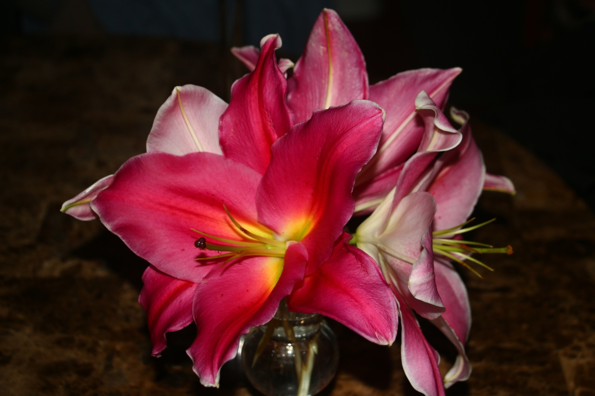 Stargazer Lily Bouquet @home