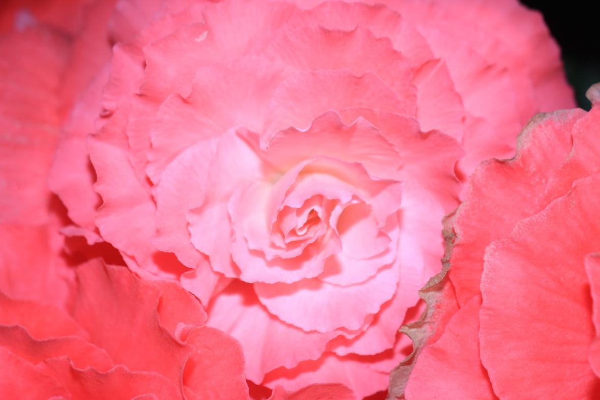 Shot on location @ J Cellan Designs Floral Boutique, East Harlem, NY