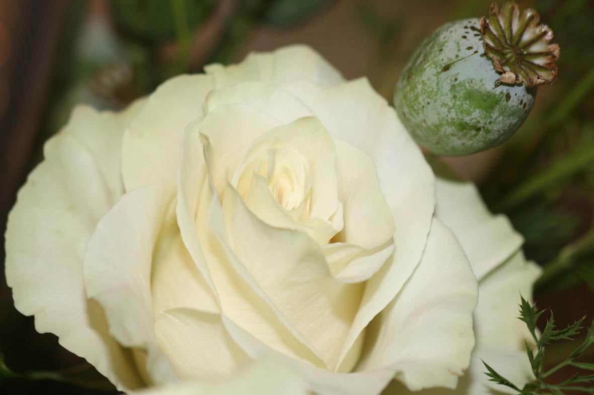 White Rose & Poppy Flower