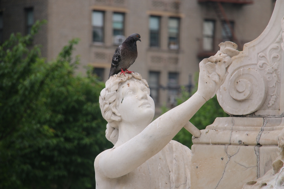 Spring 2016: Nature In Gotham: The Lady & Her Pigeon