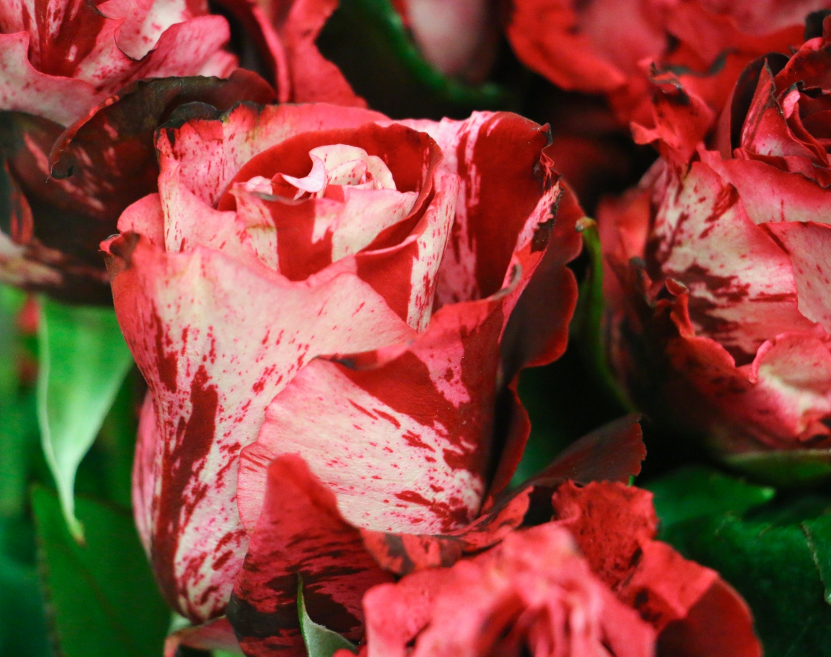 The Blood Spattered Roses