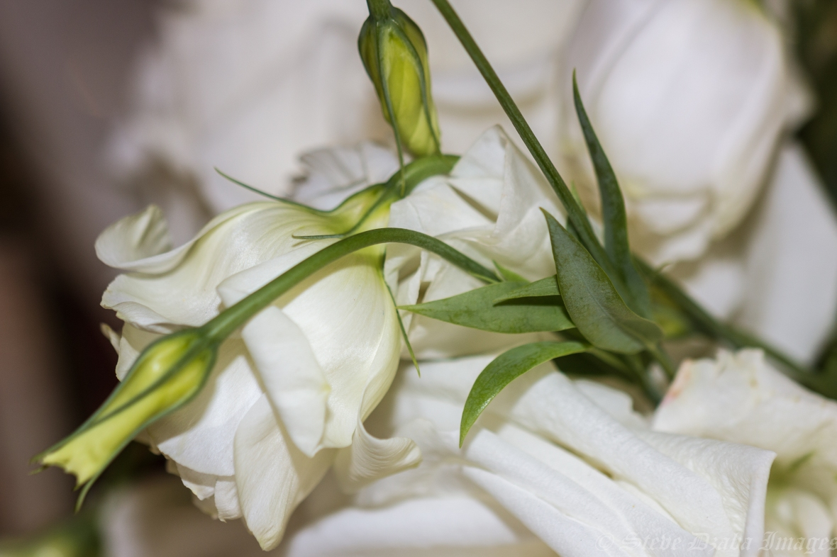 Killing Em Softly White Lisianthus