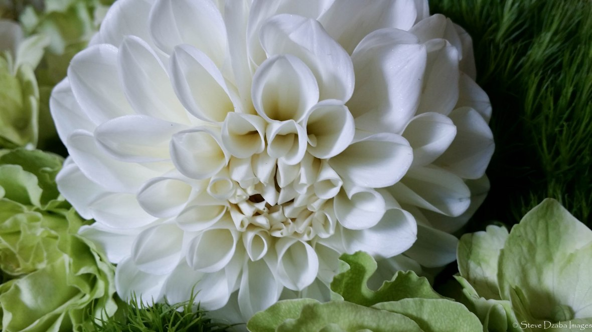 holland-white-dahlia-macro-shot Fall 2016