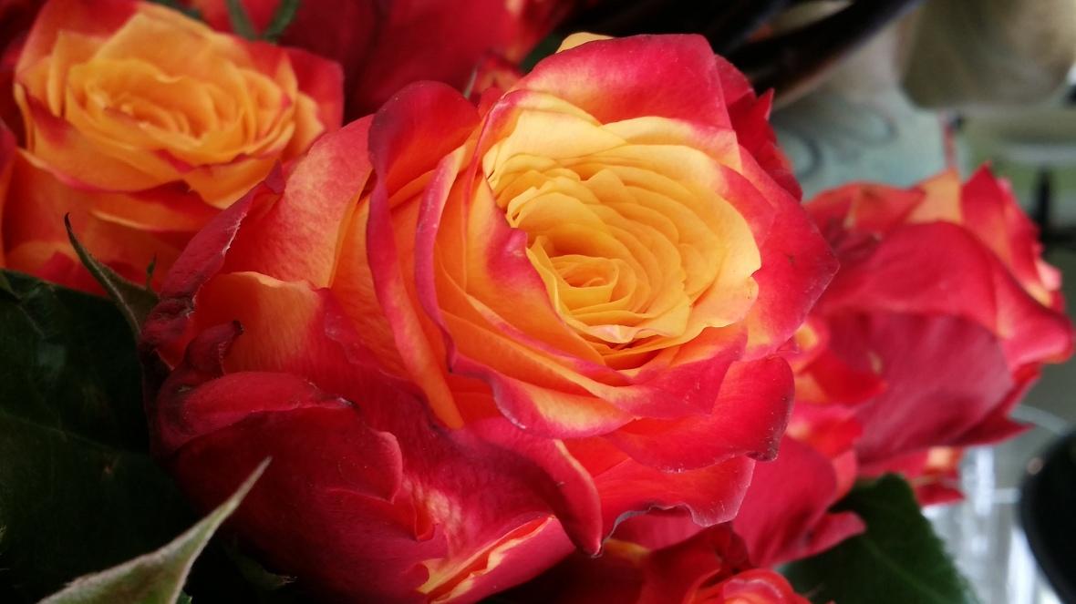 the-atomic-rose-macro
