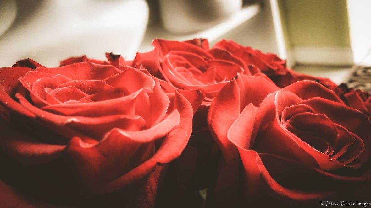 Sea Of Freedom Roses Macro Mood Limited Edition