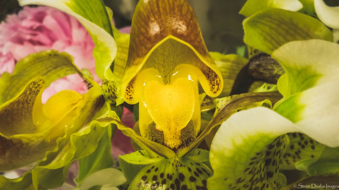 The Ladyslipper Orchid Macro