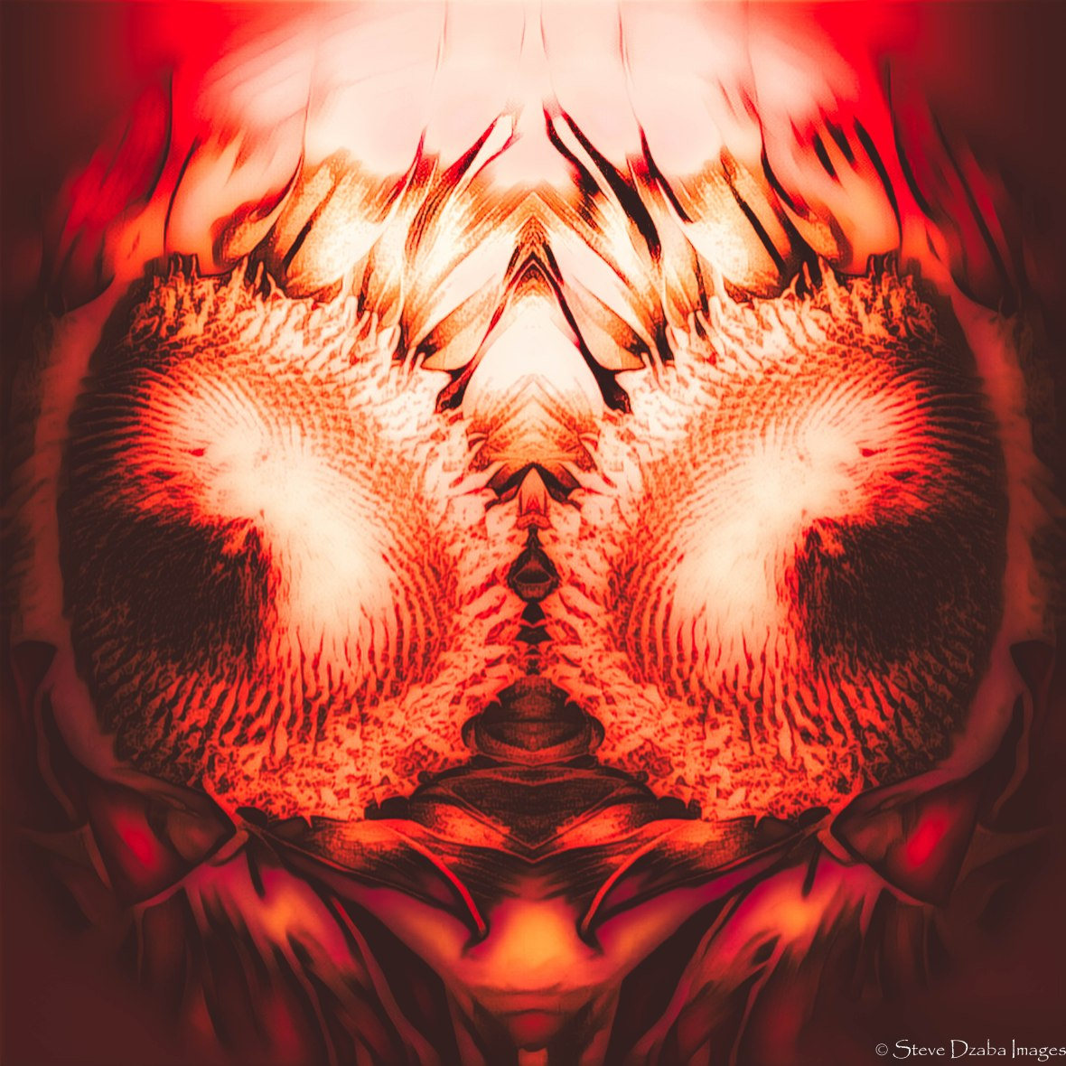 abstract-portrait-heres-lookin-at-you-flame-halo-limited-edition
